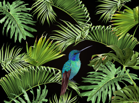 Tropical hummingbird banner