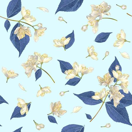 Vektor nahtlose Muster mit Jasminblüten. Design für Tee, Aromatherapie, Kräuterkosmetik, ätherische Öle, Gesundheitsprodukte, Parfüm. Kann als Hochzeitshintergrund verwendet werden. Am besten für Geschenkpapier. Vektorgrafik