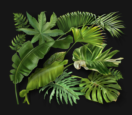 Vector banner with green tropical leaves on dark green background. Luxury exotic botanical design for cosmetics, spa, perfume, aroma, beauty salon, travel agency, florist shop Çizim