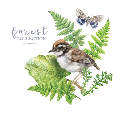 Watercolor image with forest plants and bird