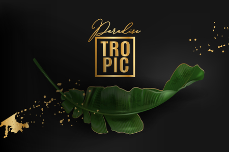 Vector advertising banner with green banana leaf and gold splash on black. Exotic botany template for cosmetics, spa, perfume, woman health care product, tourist agency. Best as pakaging design