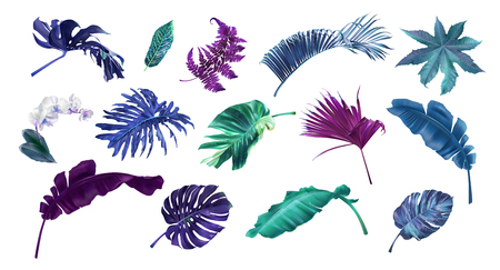 Vector coloful illustration set of tropical leaves and flowers isolated on white background. Highly detailed colorful plant collection. Botanical elements for cosmetics, spa, beauty care products