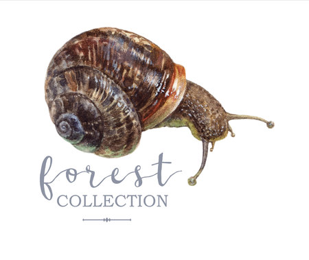 Retro hand drawn watercolor forest snail image