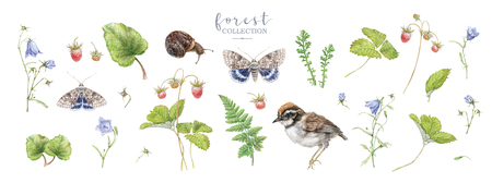 Watercolor forest plants and animals big set