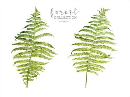 Watercolor botancal image of forest fern Banco de Imagens