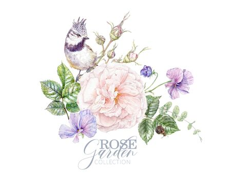 Watercolor pink rose, violet flowers and bird comoisition isolated on white background. Botanical arrangement for natural cosmetics, women products packaging, summer background, greeting design Banco de Imagens