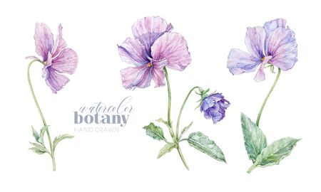Watercolor violet flower set isolated on white