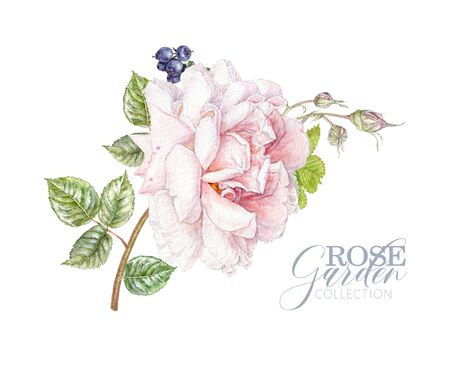 Watercolor card with pink rose and berries Banco de Imagens