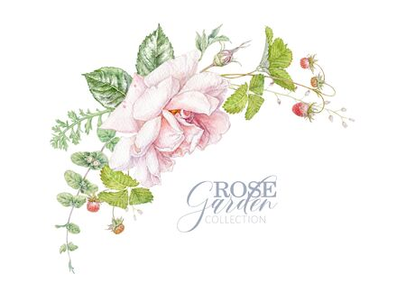 Watercolor hand drawn composition with pink rose, berries and leaves isolated on white background. Floral arrangement for natural cosmetics, women products, summer background, greeting design