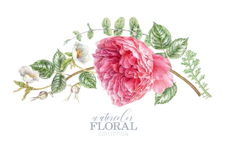 Watercolor card with pink rose and hellebore Banco de Imagens