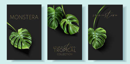 Vector monstera banners with green tropical leaves 일러스트