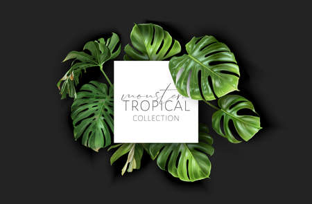Vector monstera frame with green tropical leaves