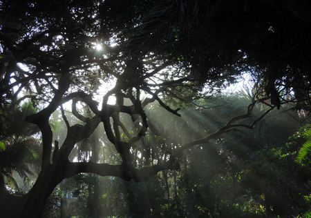 gnarled: Sun rays exploding through old gnarled trees