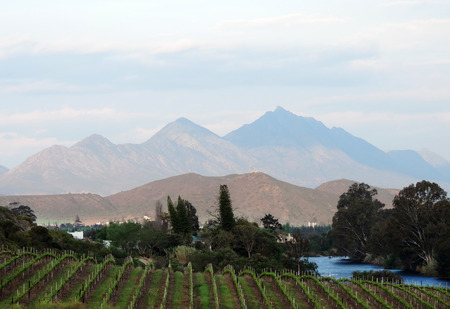 growers: Winelands at the Cape South Africa