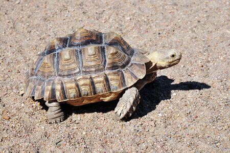 a turtle goes slowly along