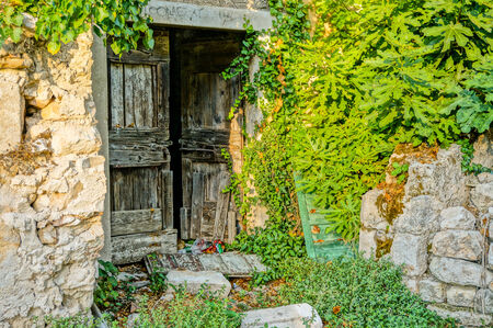 old wooden entrance door from a abandoned house  a fig tree is growing over the wall into the house  photo