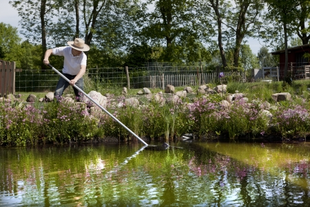 gardener with straw hat cleans pond with a net, swimming pond with flowering shore planting and field stones in the background photo