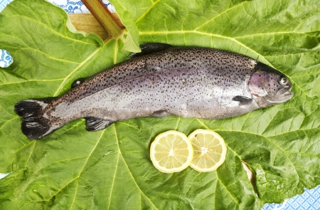 one fresh trout, laid on a leaf, served with two slices of lemon, close up of a rainbow trout photo