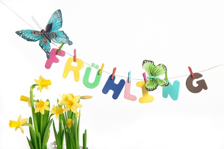 frhling: Letters on a clothes line forming the german word Fr�hling spring  next to butterflies and daffodil  Studio shot taken on white background