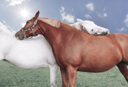 two animals: two horses brushing each other, in the background the sun shines, a horse is brown, the second white