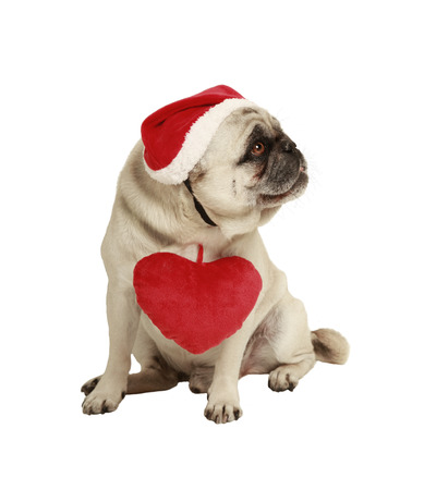 dog with hat and heart, exempted, white background, dressed as santa claus, cutout photo