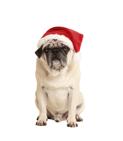dog as a Christmas gift, exempted, white background, dressed as santa claus, cutout photo