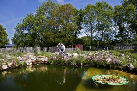 bassin jardin: poissons de l'homme dans le bassin de jardin avec une �puisette, une chute de pierre et des cl�tures de p�turage Banque d'images