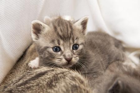 cuddly: cuddly kitten Stock Photo