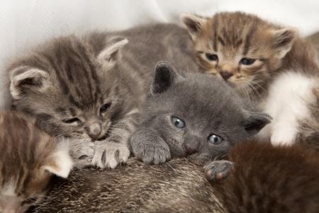 A heap of cat is cuddly babies on their mother Standard-Bild