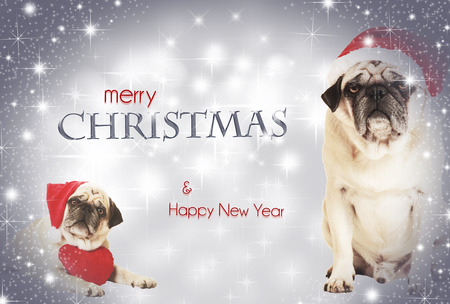 two dogs dressed as Santa Claus before glittering background, with text merry christmas photo