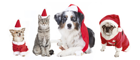 dogs and cat as a Christmas gift, exempted, white background, dressed as santa claus, cutout photo