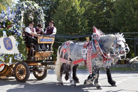 draft: Oktoberfest Munich Germany 25.09.2013 large horses pulling a carriage with draft White Beer