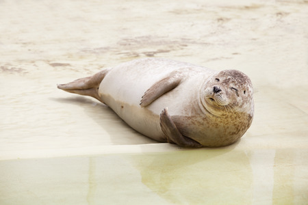 a seal lying on a sandy beach and a twinkle in his eye Imagens