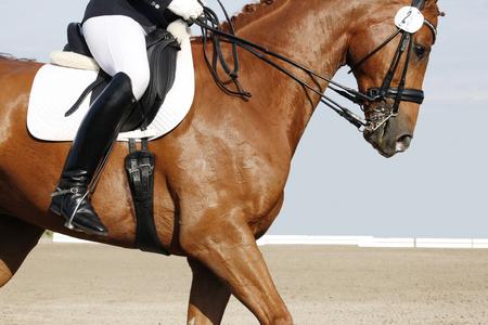 suelo arenoso: un caballo de doma marrón con jinete en un torneo Foto de archivo