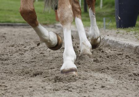 suelo arenoso: a brown dressage horse trotting on a sandy bottom tournament Foto de archivo