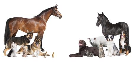 다양 한 애완 동물과 농장 동물 흰색 배경에 콜라주로 스톡 콘텐츠