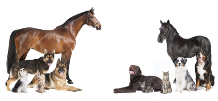 various pets and horses as a collage on a white background Stock Photo