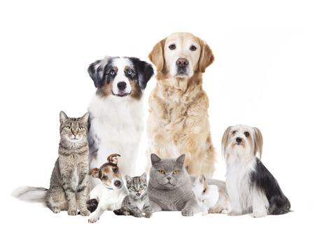 Verschillende honden en katten tegen witte achtergrond, geïsoleerd