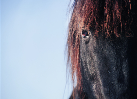 the head of a black friesian horse in the background blue sky