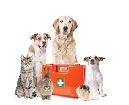 Various dogs and other pets sitting isolated with a doctors bag Reklamní fotografie