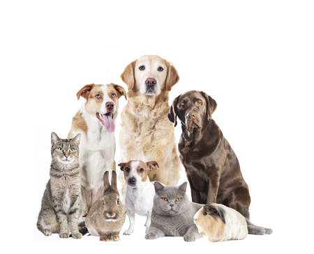 different dogs and other pets sitting isolated against white background