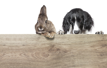 a rabbit with brown gray fur and a hunting dog isolated against a white background