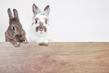 two rabbits on a wooden billboard, isolated with white background