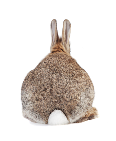 a rabbit with brown gray fur and long ears isolated against a white background Reklamní fotografie