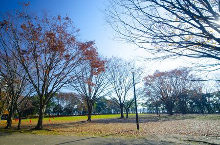 Autumn in Yatsu-higata, a tidal flat in Narashino, Chiba
