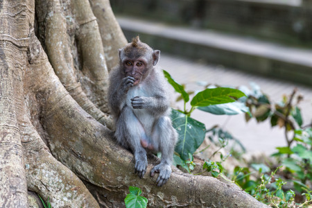 Sacred Monkey Forest Sanctuary Bali Stock Photo