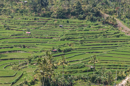 terraces: Tegallalang Rice Terraces in Bali Stock Photo