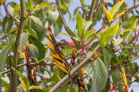sunbird: sunbird africa tanzania Stock Photo