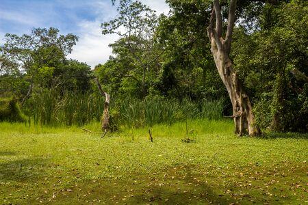 zanzibar: Zanzibar Iceland Forest