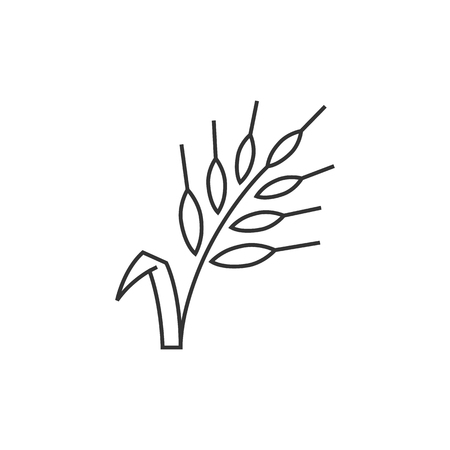 Wheat icon in thin outline style. Cereal seeds baking gluten harvest